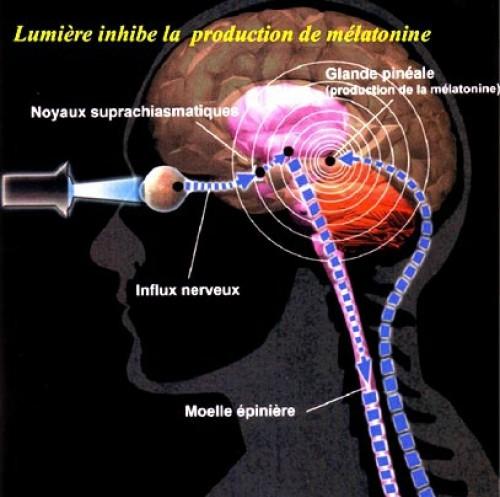 L'attaque de la glande pinéale - Par le Dr Dietrich Klingham 92801760